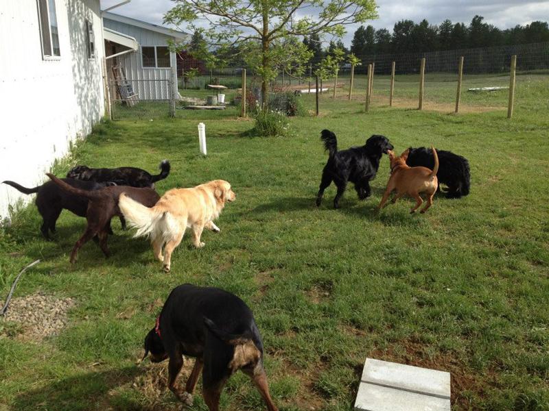 dog play group enjoying the sunshine