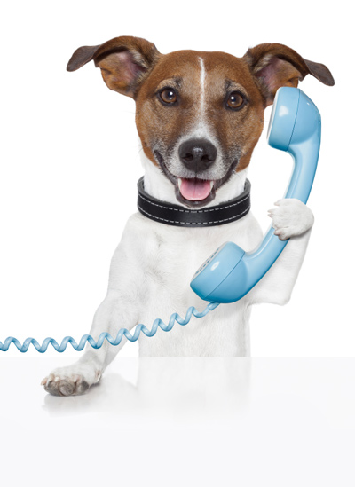 terrier-with-phone