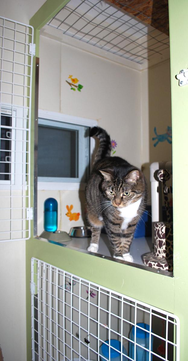 happy cat in our Cat Condo