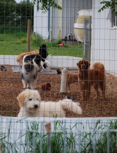 Doggy Playgroup Outdoors